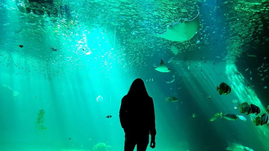 Underwater 🐟 Nature Photography Nature_collection Nature Real People Water Leisure Activity Sea Underwater Nature One Person Fish Day Women Lifestyles Swimming Vertebrate Turquoise Colored