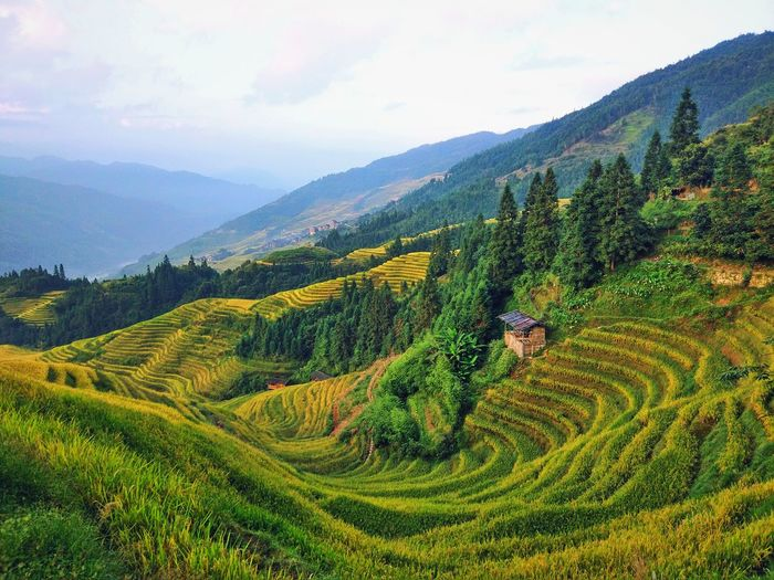 Agriculture Mountain Nature Landscape Cloud - Sky Tea Crop Beauty In Nature Beauty Field Outdoors Social Issues Sky Tree No People The Week On EyeEmTerraced Field Terraced Rice Fields Agriculture Village View Been There. Lost In The Landscape Scenics Mountain Range Day Green Color