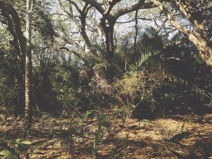 Djungle Trees