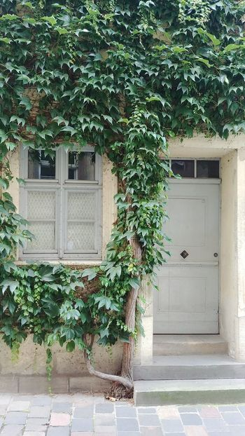 Door Architecture Building Exterior Built Structure Plant Window Day Outdoors Growth No People Tree Vine