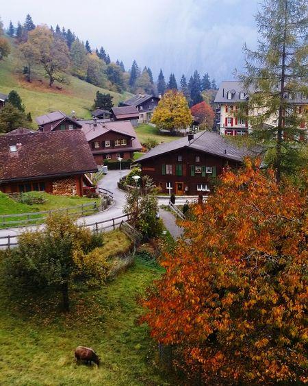 Wengen - Switzerland Wengen Swissalps Beautiful View First Eyeem Photo