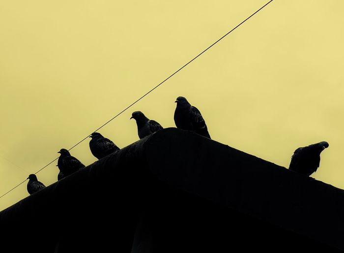Low angle view of silhouette birds perching against sky