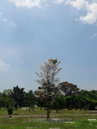 SamsungJ7 Samsungj7photography Mobileshot Nofilter Outdoors Cemetery Photography Cemeteryscape Cemetery Tree Trees Treescollection Tree Of Life Tree And Sky Afternoon No People Rjdr Rigosentertainment