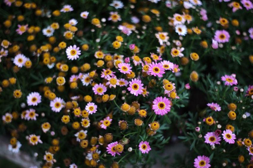 恩愛農場 Taiwan 臺灣 Nature Flower Nature Freshness Growth Beauty In Nature Plant No People Fragility Outdoors Flower Head Close-up Day