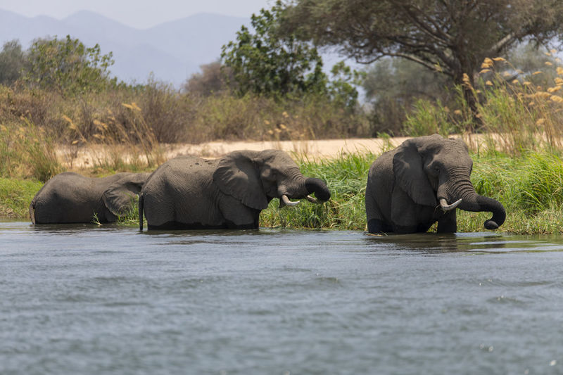 View of elephant drinking water from lake