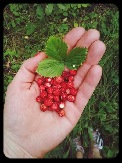 poziokowe love! Nature Forest. Raspberry Happy