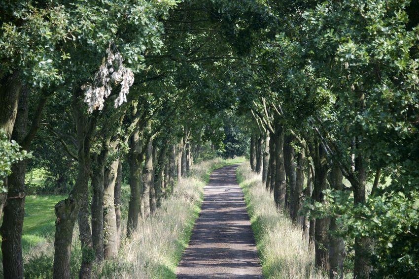 Dutch cycle route 'Rondje Posbank' in Gelderland. Netherlands The Netherlands Day Dutch Holland Nature No People Outdoors Tree