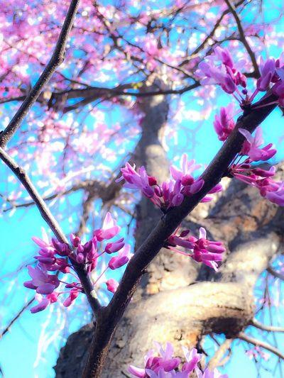 Love this tree Photogra-tree Trees Tree TreePorn Hugging A Tree Sunset #sun #clouds #skylovers #sky #nature #beautifulinnature #naturalbeauty #photography #landscape Sunny Spring Spring Flowers Springtime