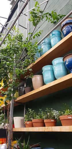 Low angle view of potted plants on building