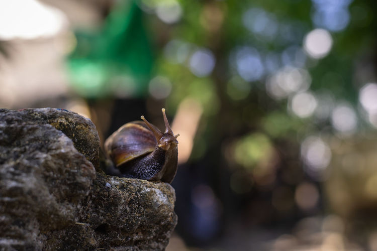 Close-up of snail on rock
