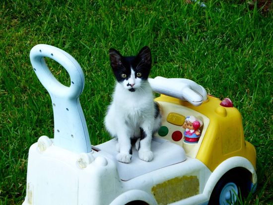 Cat Cats Blackandwhite Black And White Black And White Cat Black And White Kitty Kitten Cute Kitten Blackandwhitecat Cute Cute Cats Cutecats Big Eyes Wide Eyed Catlover Cat Love