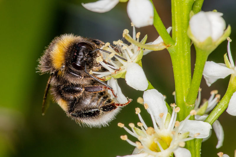 Animal Themes Animal Wildlife Animals In The Wild Beauty In Nature Bee Bumblebee Close-up Day Flower Flower Head Focus On Foreground Fragility Freshness Garden Growth Honey Bee Insect Macro Nature No People One Animal Outdoors Plant Pollination EyeEmNewHere