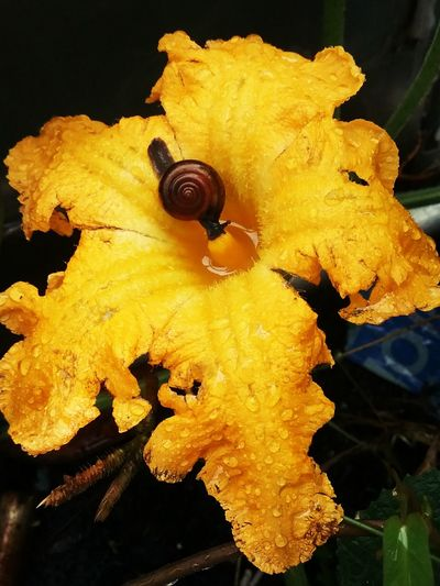 snail pumkin flower Plant Botanical Garden Animals In The Wild Yellow Close-up Nature Beauty In Nature Living Organism No People