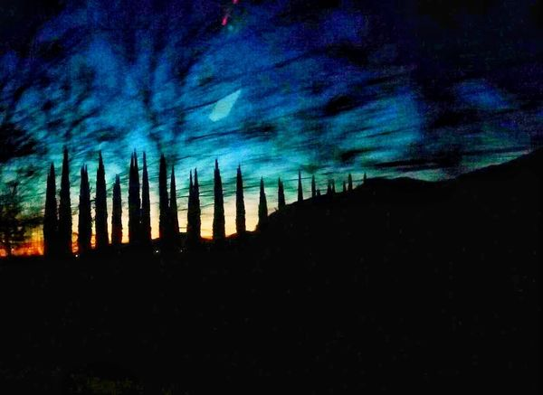 Autostrada A22, Gennaio 2018 Silhouette Nature Skyporn Sunset Tree Trees Outdoors Blue No People Landscape Beauty In Nature Night