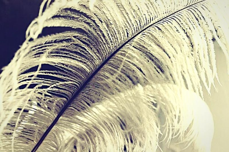 """Propulsion mechanism for the archaic flight of fancy"" (2015) Feather Quill Feathercraft White Feather Writing Tool Simple And Beautiful"