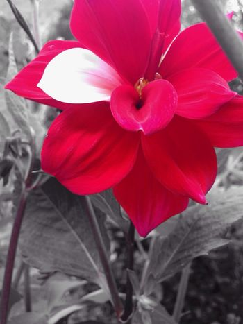 Color Splash Colour Red Flower Macro Photography Nature Photography Colombia