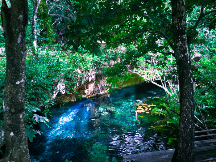 Cenote Tree Outdoors Nature Day Beauty In Nature No People Growth Forest Green Color Water Nature Scenics Beauty In Nature Travel Destinations Landscape Tranquility EyeEm Selects High Angle View Summer Travel Mexico Green Color Rural Scene Tranquil Scene