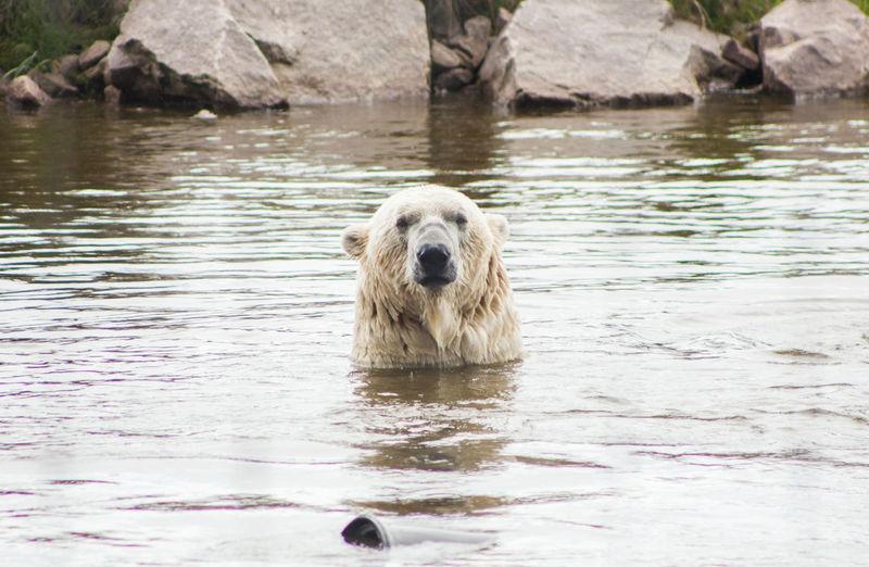 Polar Bear Pond