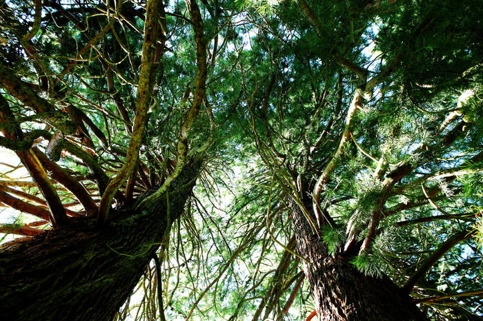 Under the trees Auvergne AuvergneRhoneAlpes Branch France La Bourboule Low Angle View Nature Photography Travel Tree