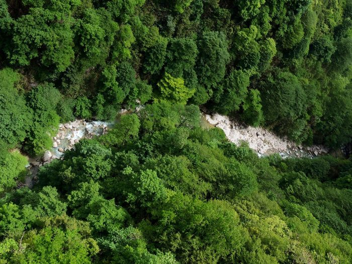 High angle view of stream in forest