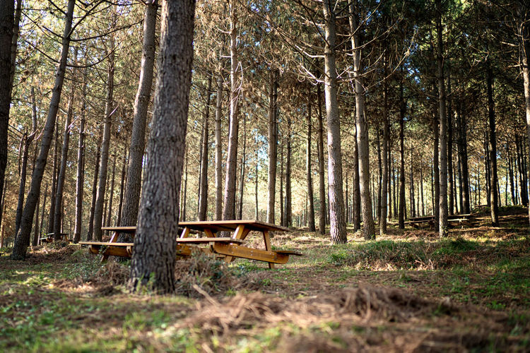 Empty bench amidst trees in forest
