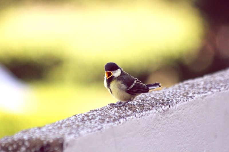 Nature On Your Doorstep Fully-fledged Birds Beautiful Nature Nature Birds_collection