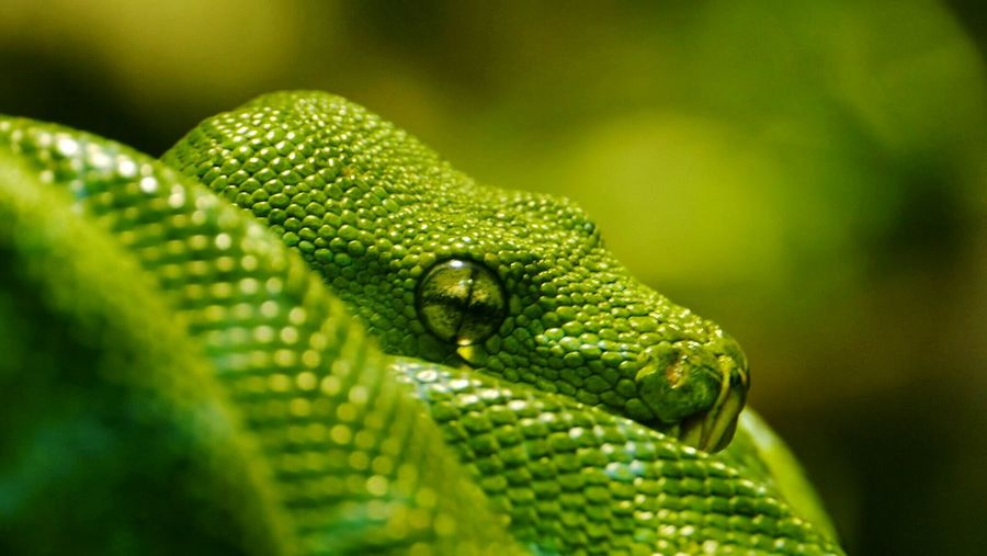 Green Snake First Eyeem Photo Snake Reptiles reptile photograpy Animal Themes Living Things Spiral Amazing Dangerous Nature Animal Life Eye Wildlife Photography Wildlife