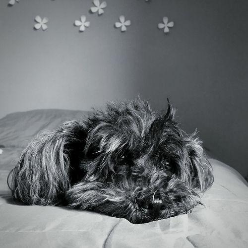 Toda una vida Pets Dog Close-up Animal Hair At Home Animal Face