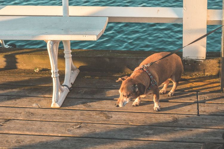 Animal Themes One Animal Domestic Animals Mammal No People Transportation Outdoors Day Nature Going For A Walk Sunlight Weiner-Dog Dog Pets Dogs In The Dock Dog Love Leash Dogs Poland Animals Sunbathing Owner Happy Relaxed Chilling