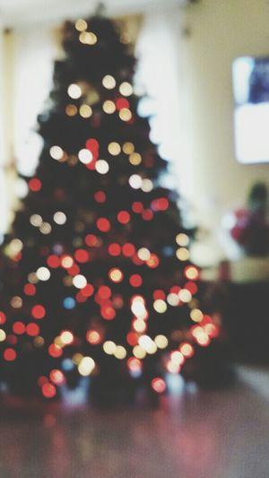 xmas tree Tree Xmas Xmas Tree