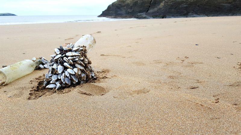 Showcase: January Wales West Wales Beach DryJanuary Sand Bottle Goosebarnacles Sunday EyeEm Nature Lover Eyem Beach