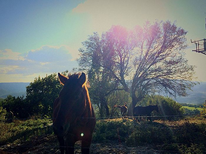 Horse Horses Horse Riding Green Trees Tree Taking Photos Sun Clouds And Sky Clouds