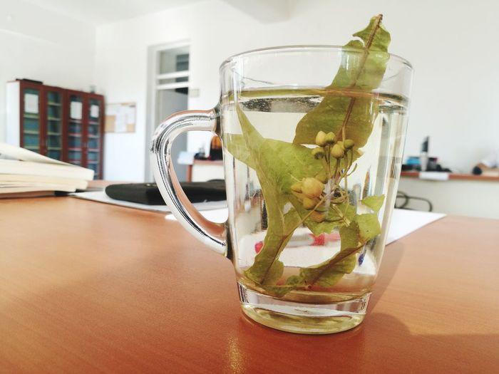 Ihlamur kokusu Tonic Water Drink Mint Leaf - Culinary