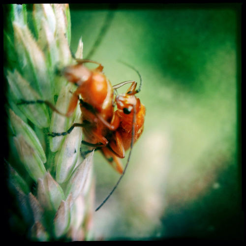 Hipstamatic_insect