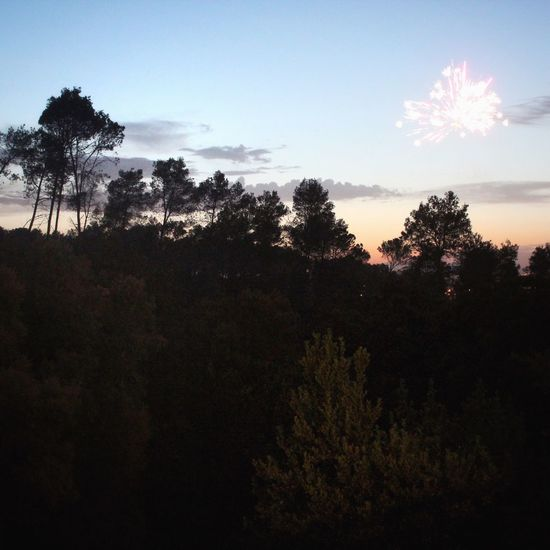 Fireworks Holiday Sunset Forest