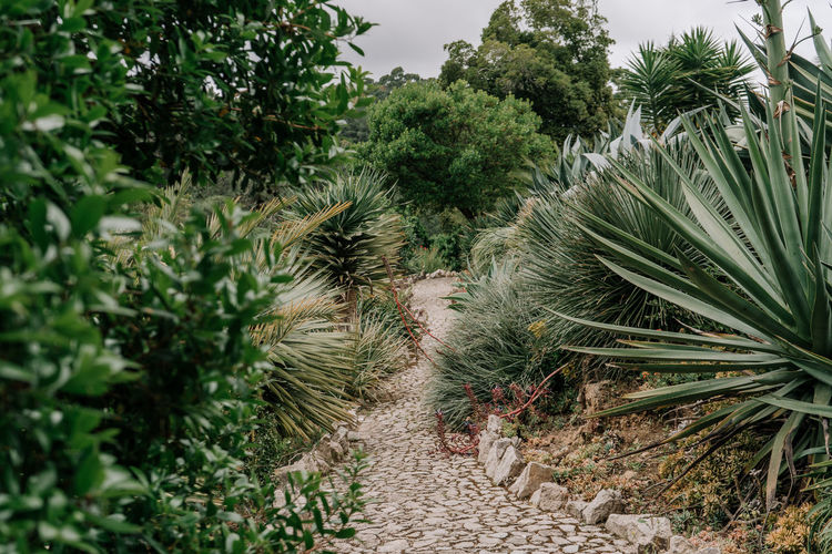 mexican garden Mexican Garden Garden Photography Plant Leaves Path Pathway Stones Wild Nature Plants Growth Beauty In Nature Tranquility Leaf Plant Part Palm Tree No People Tranquil Scene Outdoors Green Color Freshness Footpath