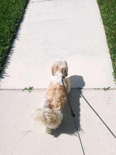 High angle view of dog on a leash