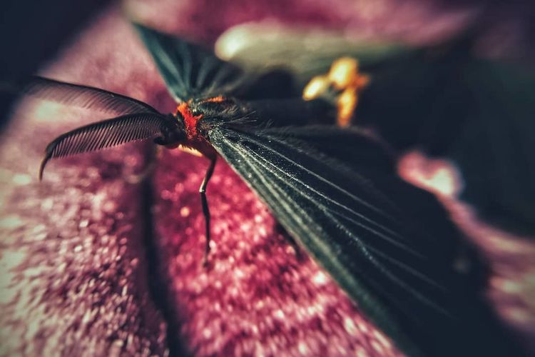© HACHESKIZO Photography Insect Macrophotography Butterfly Macro Photography Love Spider
