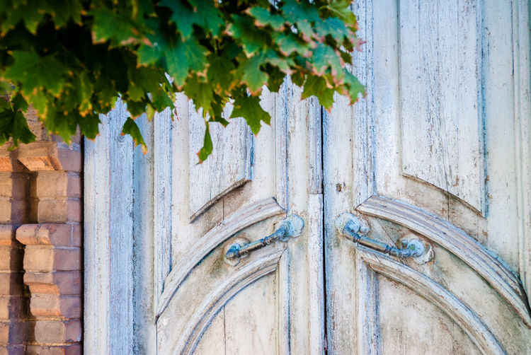 Architecture Backgrounds Building Building Exterior Built Structure Close-up Day Door Entrance Leaf Metal Nature No People Old Outdoors Pattern Plant Part Wall - Building Feature Weathered Wood - Material