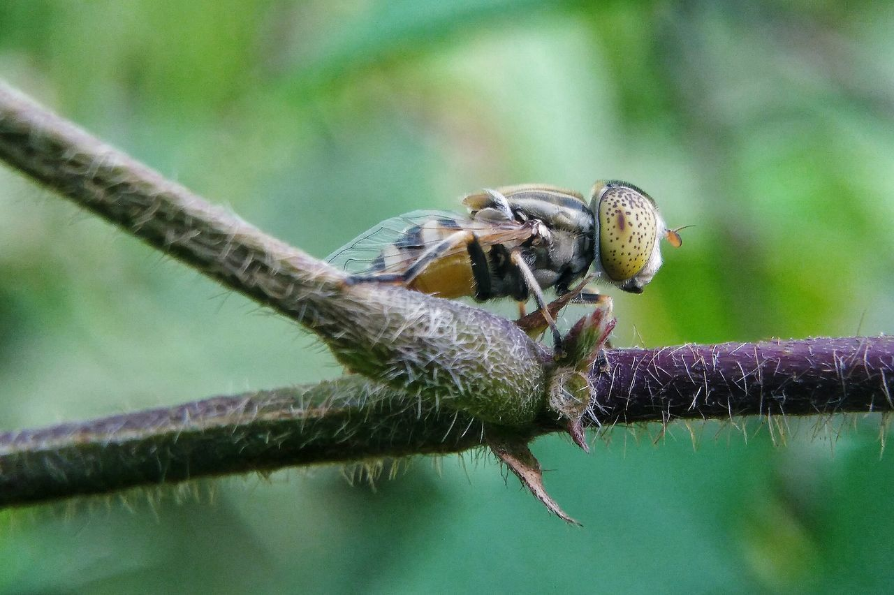 one animal, animals in the wild, animal themes, insect, animal wildlife, focus on foreground, nature, day, close-up, no people, outdoors, plant, branch, growth, beauty in nature