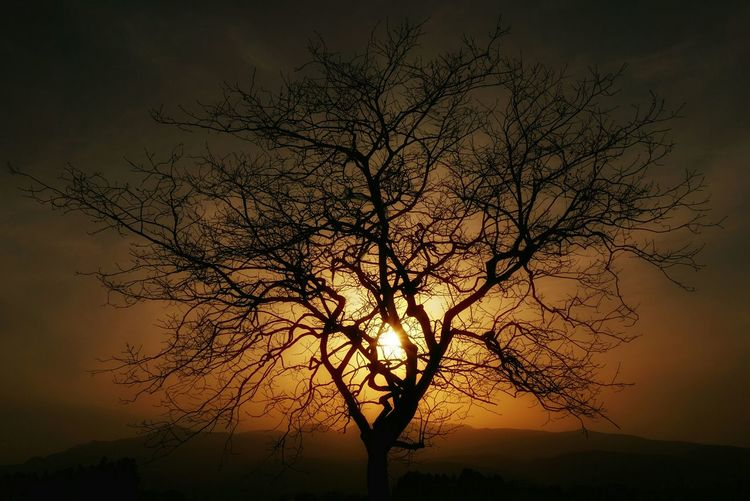 Low Angle View Of Silhouette Bare Tree Against Cloudy Sky At Sunset