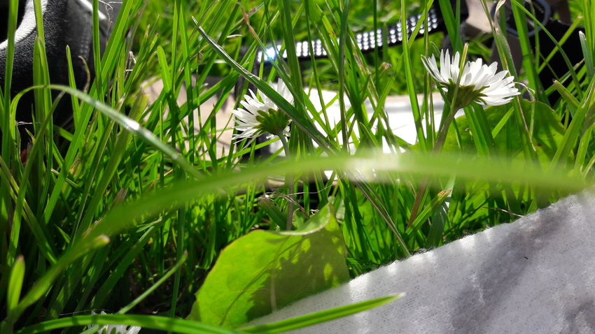 Grass Nature Growth Green Color Day Outdoors No People Water Plant Beauty In Nature Rice Paddy Close-up Freshness