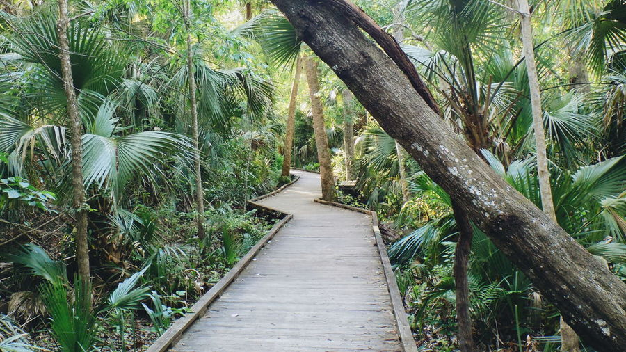 Footpath amidst palm trees