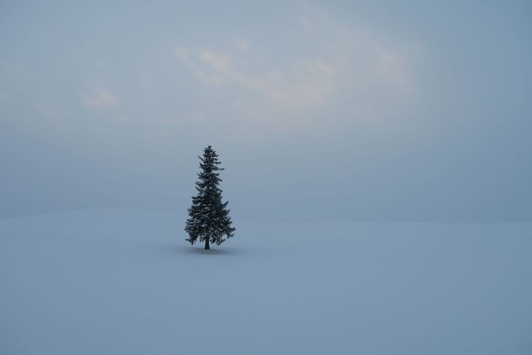 Plant on snow covered field against sky