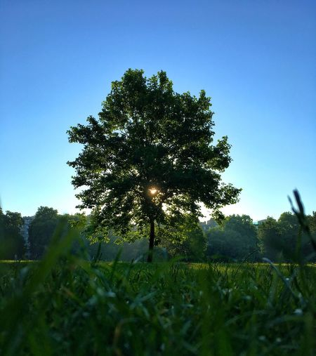 London. Green park 6 am Tree Clear Sky Nature Grass Growth Blue Beauty In Nature Landscape Field Tranquil Scene No People Outdoors Scenics Tranquility Day Sky Close-up Morning Rituals Morning Outdoor Photography The Great Outdoors - 2017 EyeEm Awards Beauty In Nature High Contrast Sunlight Nature_collection Postcode Postcards