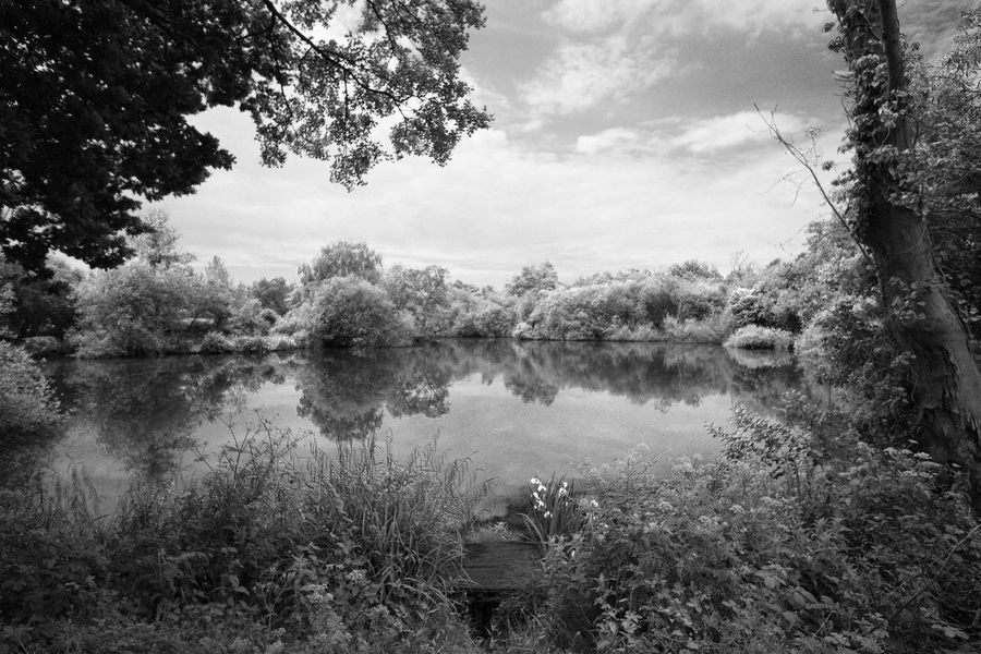 Beauty In Nature Day Grass Growth Lake Landscape Midhurst Monochrome Nature No People Outdoors Reflection Reflection Lake Sky Tranquility Tree Water