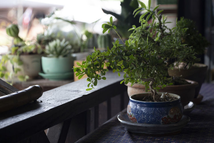From a nice balcony Decorative Plants EyeEm EyeEm Best Shots EyeEm Nature Lover EyeEm Gallery EyeEmBestPics Close-up Day Eye4photography  Flower Pot Focus On Foreground Freshness Gardening Green Color Growth Horticulture Houseplant Leaf Nature No People Plant Plant Part Potted Plant Selective Focus EyeEmNewHere 2018 In One Photograph