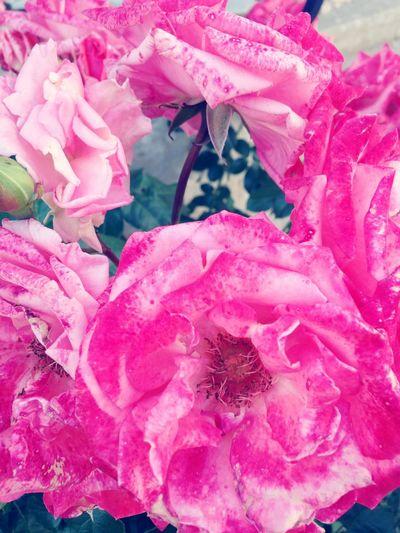 Fleurs Flowers Fleur Flower