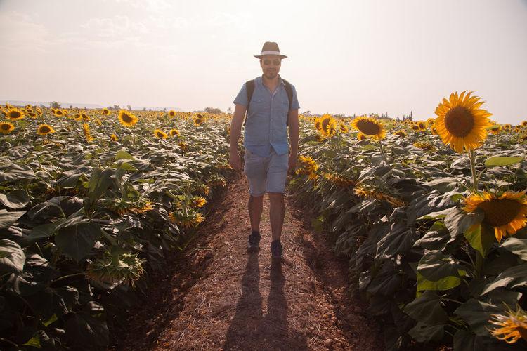 Portrait man wearing hat walking on sunflower field