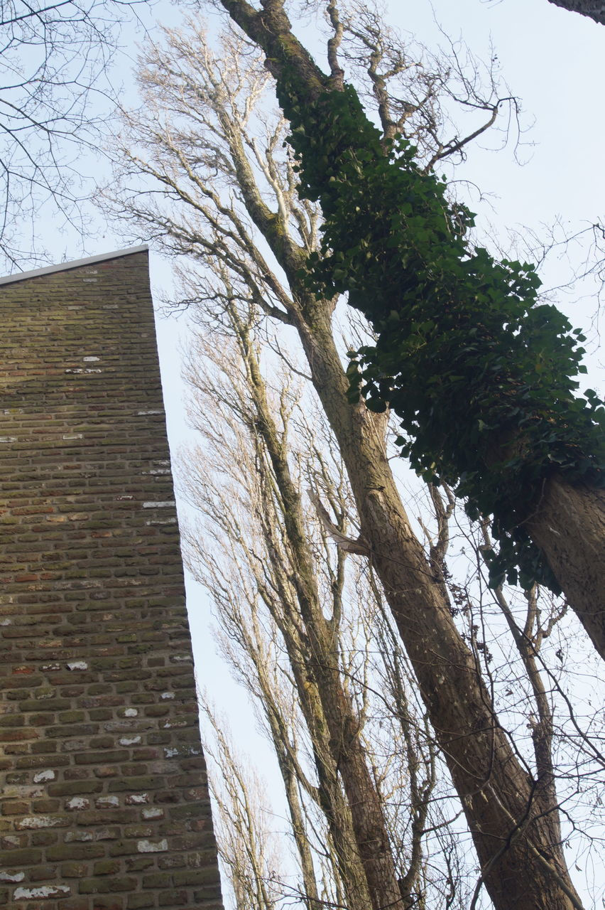 tree, low angle view, day, no people, built structure, architecture, outdoors, nature, branch, close-up, sky